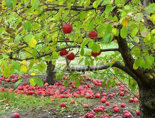 Apple Garden – Karaj Iran Tourist Attractions
