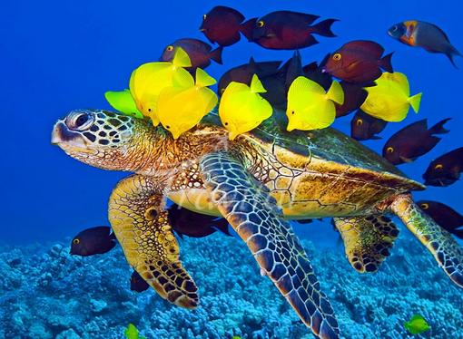 Kish Aquarium – Kish