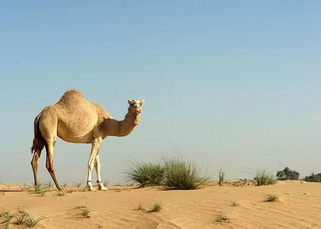 The Mesr Desert